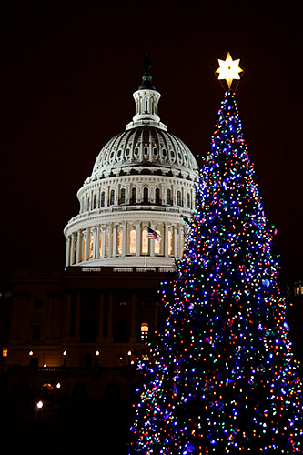 2007 Christmas Tree at the US Capitol - Christmas Lights In Washington, DC €� 2007 :: Beautiful Flower