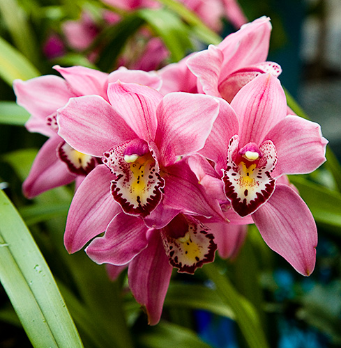 More Orchids From The U.S. Botanic Garden :: Beautiful