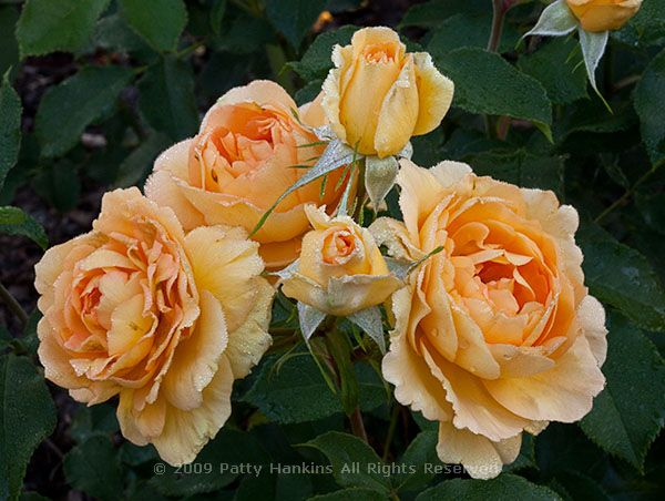 Roses For A Winter Day Beautiful Flower Pictures Blog