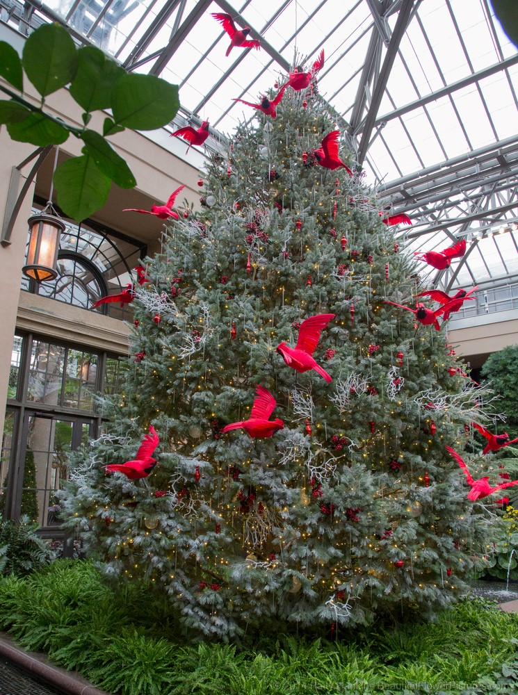 Cardinals In The Conservatory Christmas At Longwood