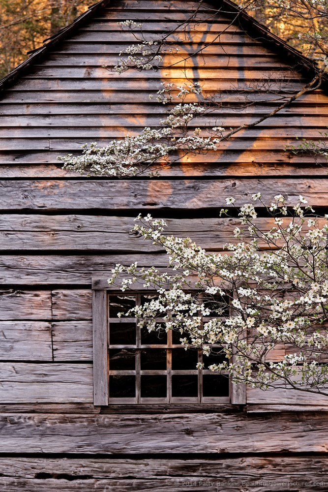 New photo dogwood at the ogle cabin beautiful flower for Dogwood cabin