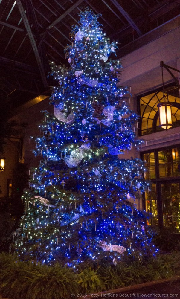 Christmas in the East Conservatory, Longwood Gardens – 2015 ...