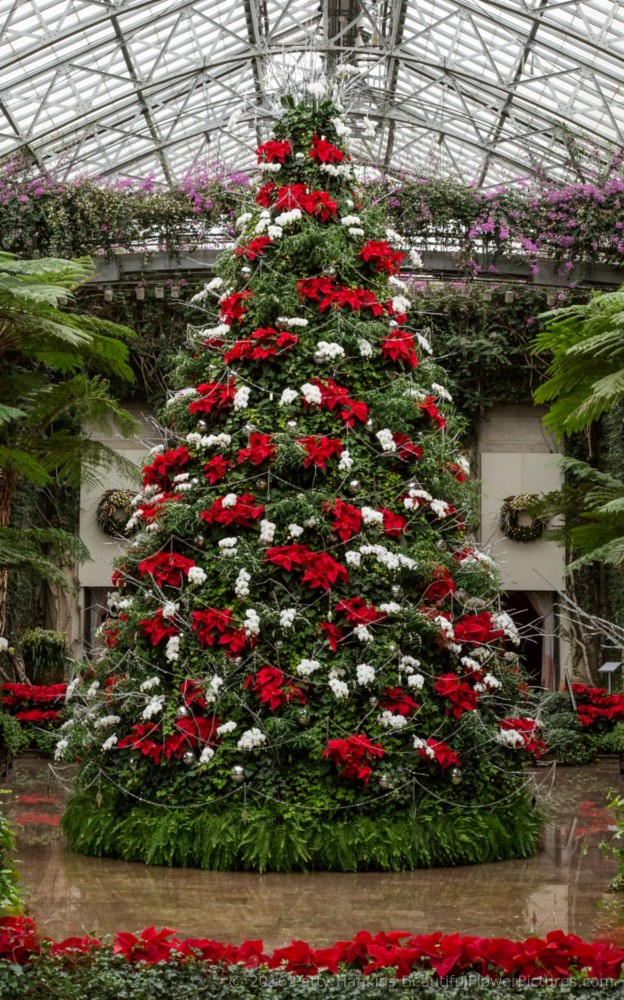 christmas at longwood gardens 2016 beautiful flower pictures blog