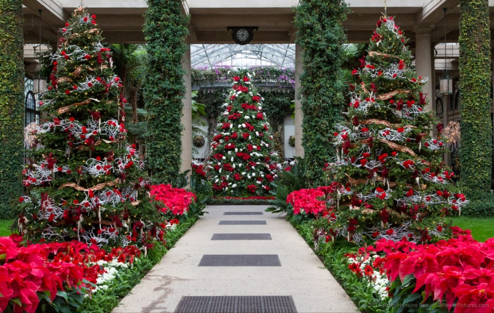 christmas in the exhibition hall longwood gardens 2016 beautiful flower pictures blog