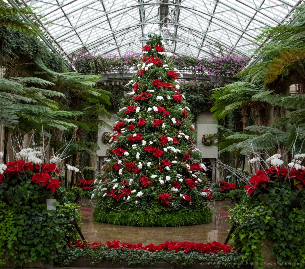 Christmas In The Exhibition Hall Longwood Gardens 2016