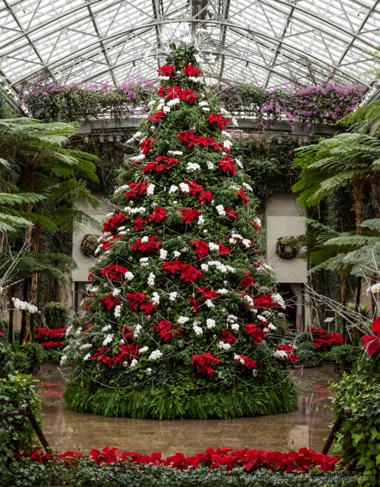 Christmas in the Exhibition Hall – Longwood Gardens – 2016 ...