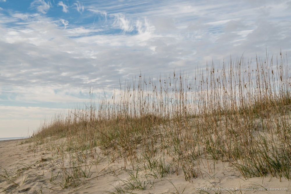 Dune Grasses, Tybee Island, Georgia © 2017 Patty Hankins