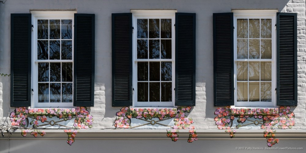 Painted Window Boxes, New Orleans ©2017 Patty Hankins