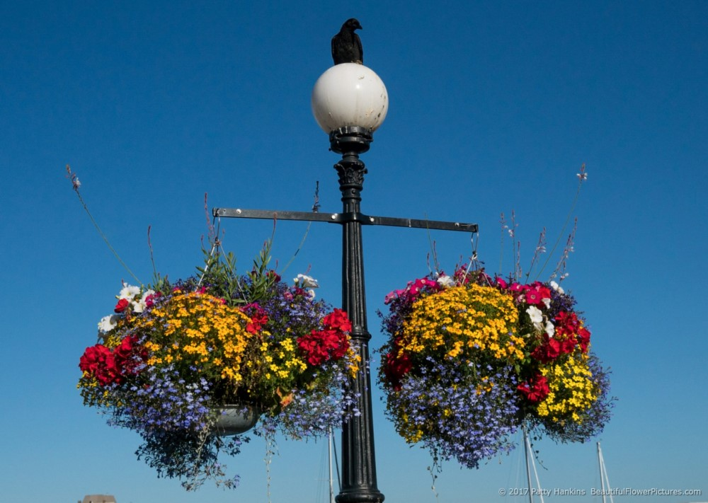 Hanging Flower Baskets Seattle : Photos from the road seattle and victoria beautiful