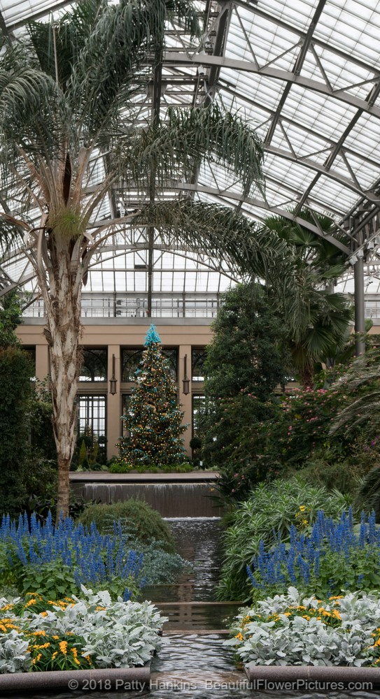 Christmas At Longwood Gardens 2017 In The Conservatory