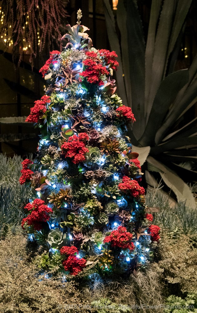 Christmas at longwood gardens 2017 a few last photos beautiful flower pictures blog for Longwood gardens christmas 2017