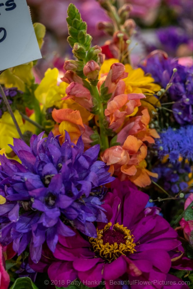 Flowers at the Central Market in Lancaster PA