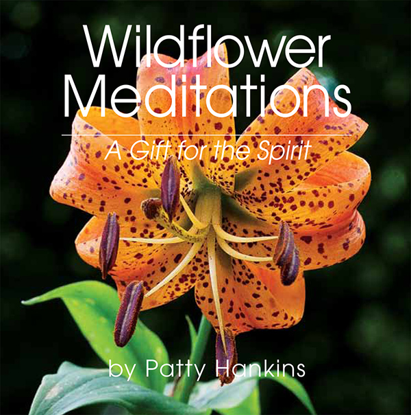 Wildflower Meditations