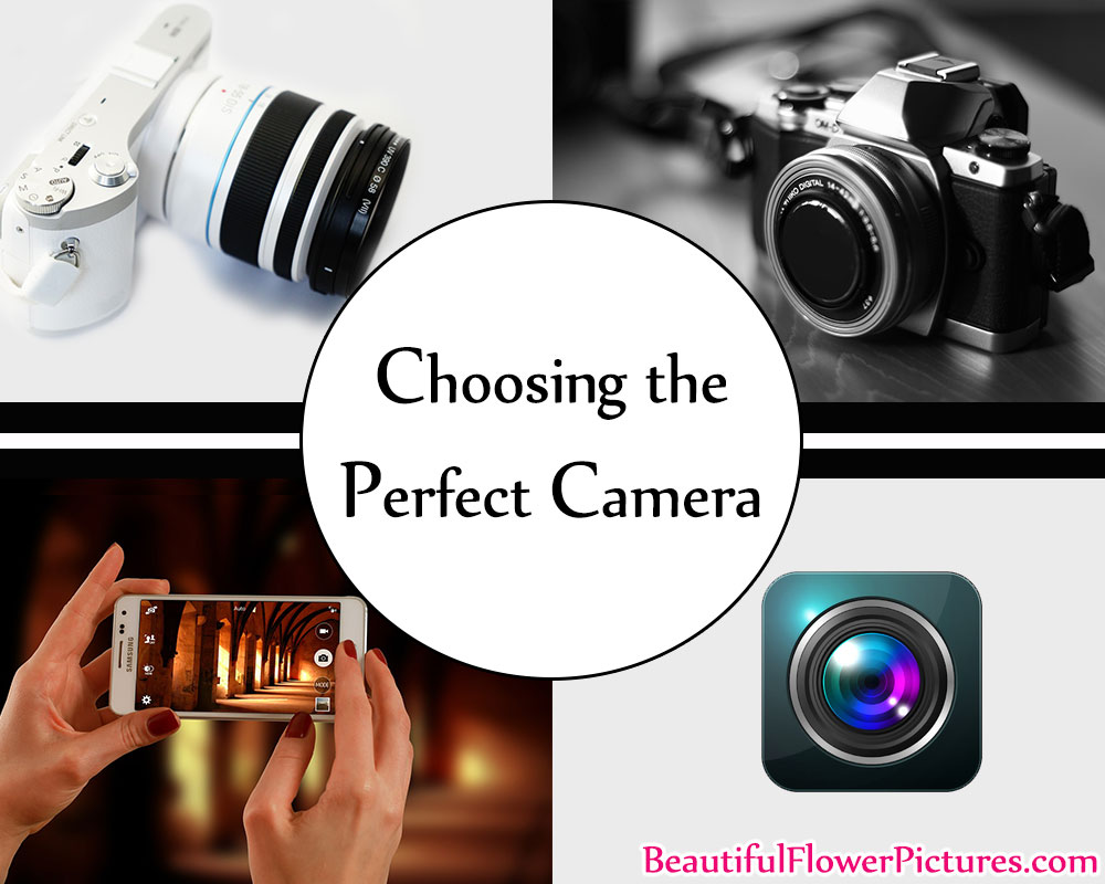 How To Choose The Right Camera And Make Beautiful Pictures…