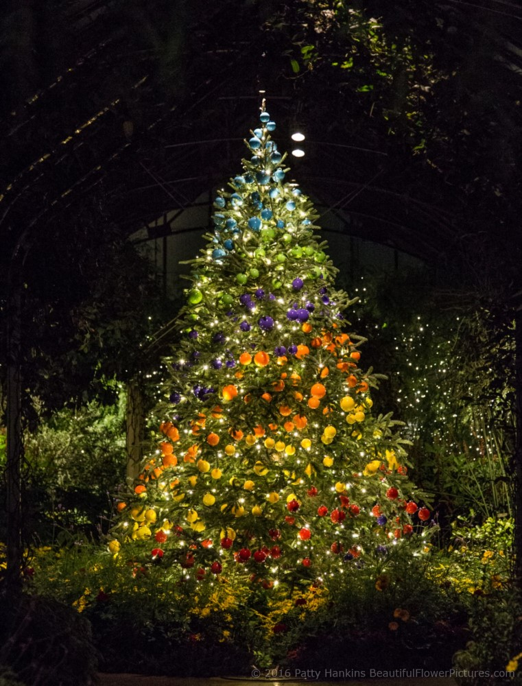 Christmas in the conservatory longwood gardens 2016 beautiful flower pictures blog for Longwood gardens christmas 2017